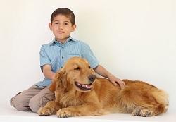 Hundefutter-Testsieger