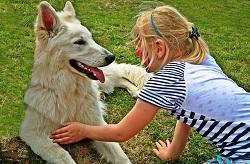 Test-Hundefutter